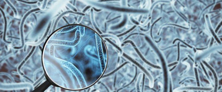 Mikroben zum Recycling verwenden, wie geht das?